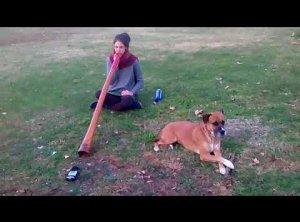 Improvisación Didgeridoo